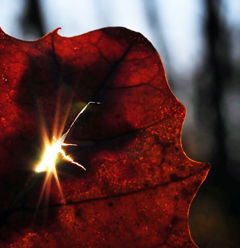 Leaf with Light2